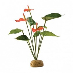 Photo de Plante Anthurium chez Zone Aquatique